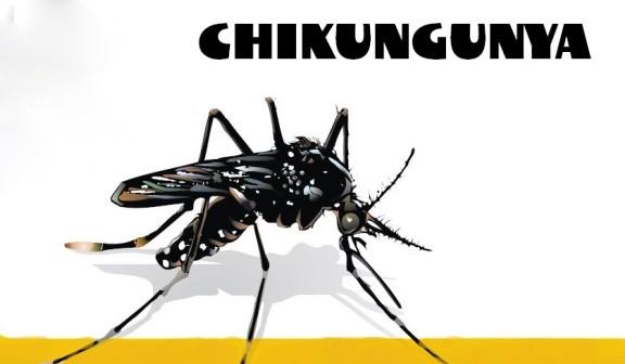 Ministério da Saúde lança guia para manejo clínico da febre de chikungunya